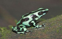 Wild Life in Costa Rica