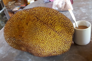 jackfruit costa rica exotic fruits