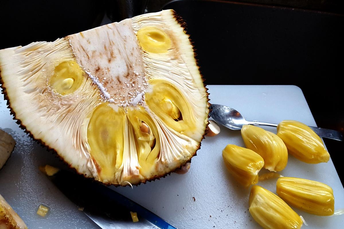 jackfruit costa rica exotic fruits