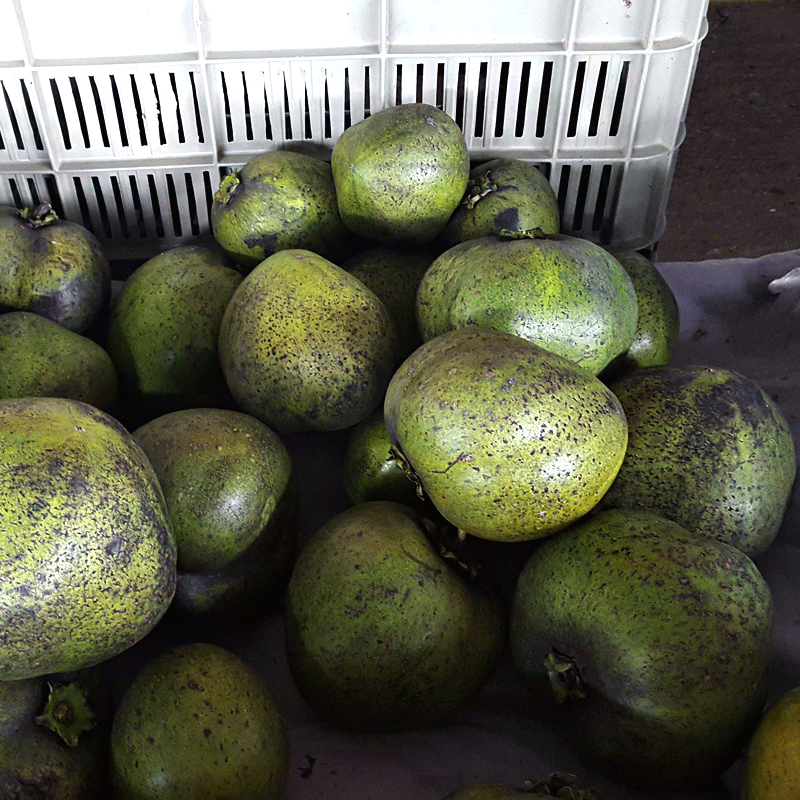 Black Sapote Exotic Fruits Costa Rica