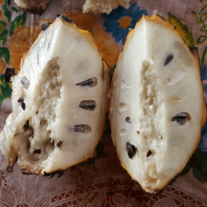 Soncoya bi ri bi exotic Fruit of Costa Rica