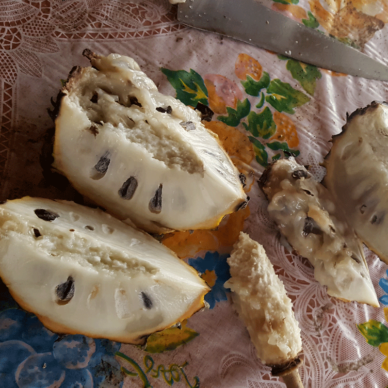 Soncoya bi ri bi exotic Fruit of Costa Rica